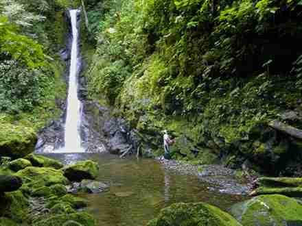 Ayahuasca Costa Rica - Ayahuasca, Kambo, and other master plant